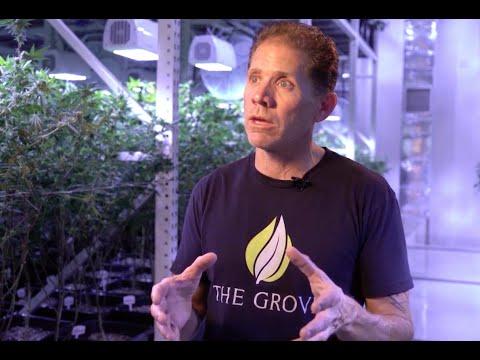 LED Grow Lights: Why The Grove chose Heliospectra