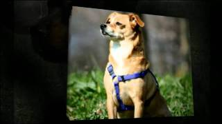 Service Dog Training San Diego - Service Dog Trainers