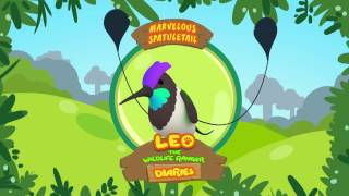 Leo The Wildlife Ranger Diaries | Marvelous Spatuletail | Learning For Kids | Junior Ranger