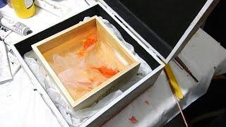ryukin, ranchu and oranda portrait 3D goldfish art by Gerardo Chierhcia