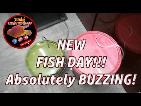 ITS NEW FISH DAY!!!