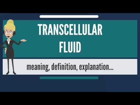 What is TRANSCELLULAR FLUID? What does TRANSCELLULAR FLUID mean? TRANSCELLULAR FLUID meaning