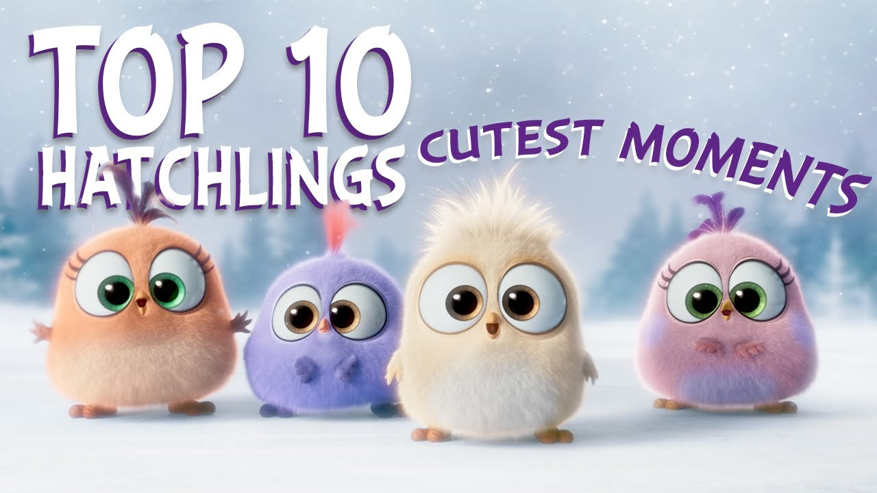 Download Angry Birds | Top 10 Hatchlings Cutest Moments