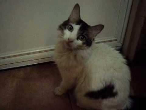 Michita The Cat Says Meow Open The Door Youtube