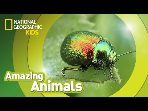Beetle 🐞   AMAZING ANIMALS