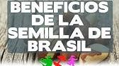 Brazilian Seed Sdb In Usa Youtube