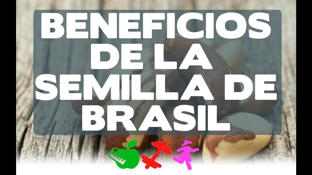 Beneficios de la semilla de brasil dgs rocio youtube Semilla de brasil es toxica