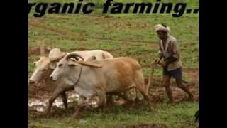How To Do ORGANIC FARMING ? (Best Formula) By Rajiv Dixit.