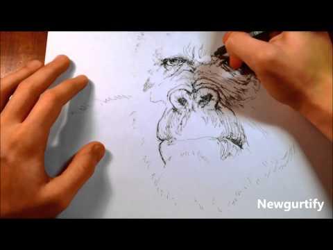 Speed drawing Gorilla sketch