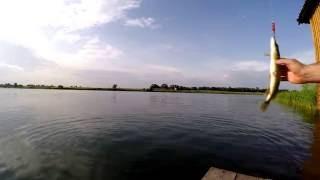 Рыбалка в Червлённом 19.06.2016г