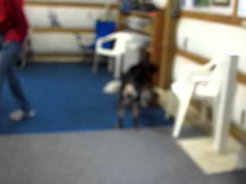 Video of adoptable pet *Roe URGENT Campbell County AC Facility
