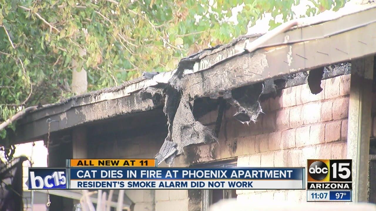 Cat dies in Phoenix apartment fire