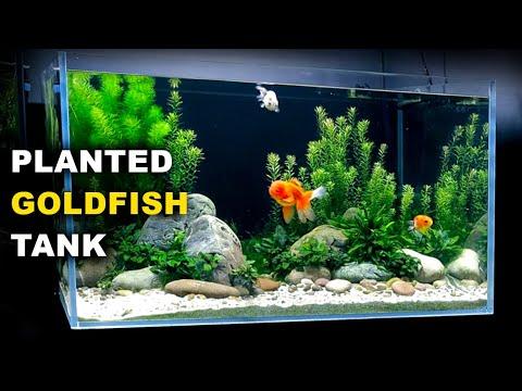 Aquascape Tutorial: PLANTED GOLDFISH Aquarium: The O'Ranchu Crew (How To: Full Step By Step Guide)