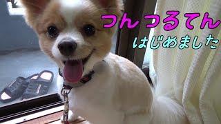 もうすっかり暑いですねぇ(^^; 家の中でもハァハァ暑そうなころ介、すっ...