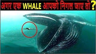 क्या होगा अगर एक WHALE आपको निगल जाए तो? What If You Were Swallowed by A Blue Whale