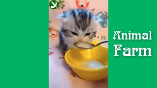 CATS 2019 Funny cats jokes with cats to tears!!