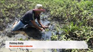 Hand Fish Catching ! Amazing Farmer Catches a lots of fishes the canal - Fishing by Hand