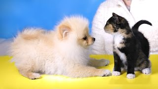 PUPPY MEETS KITTENS FOR THE FIRST TIME | RCLBEAUTY101