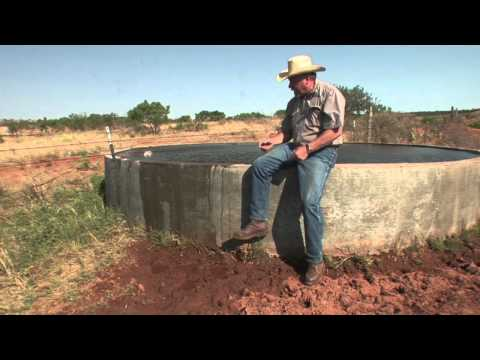 Coping With Drought to Help Quail Populations - Texas Wildlife Association