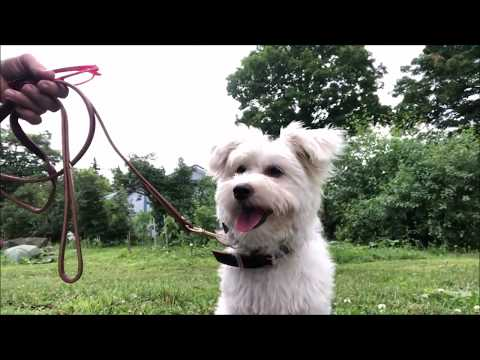 Puppy or Dog Training you must Build on Success