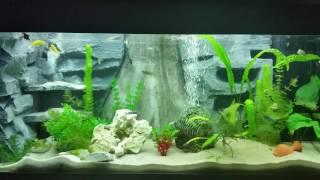 aquarij