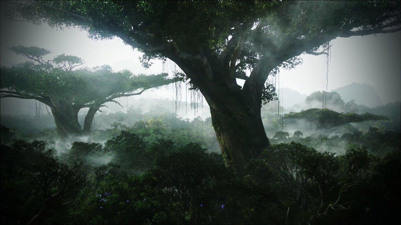 El Árbol Gigante de la Vida y los Manantiales  ¿De dónde nace toda el agua de este mundo?