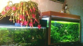 Все мои аквариумы. Aquarium and Fishe.(, 2013-08-17T17:59:32.000Z)