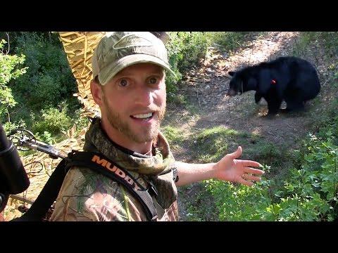 Black Bear Hunting / Best Archery Heart Shot Ever!