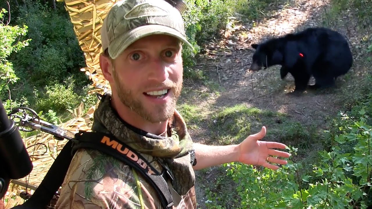 black bear hunting best black bear archery shot ever youtube bear anatomy shot placement black [ 1280 x 720 Pixel ]
