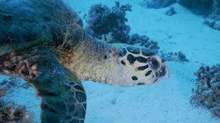 Underwater • Beautiful Relaxing Music with Water Sounds for Sleep & Meditation