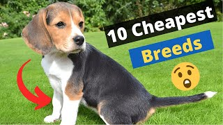 10 Most Cheapest Dog Breeds on this Planet