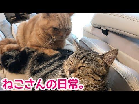 おもわず笑っちゃう猫さんたちの日常。