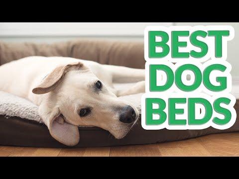 Best Dog Bed 2019 - 7 TOP Dog Beds
