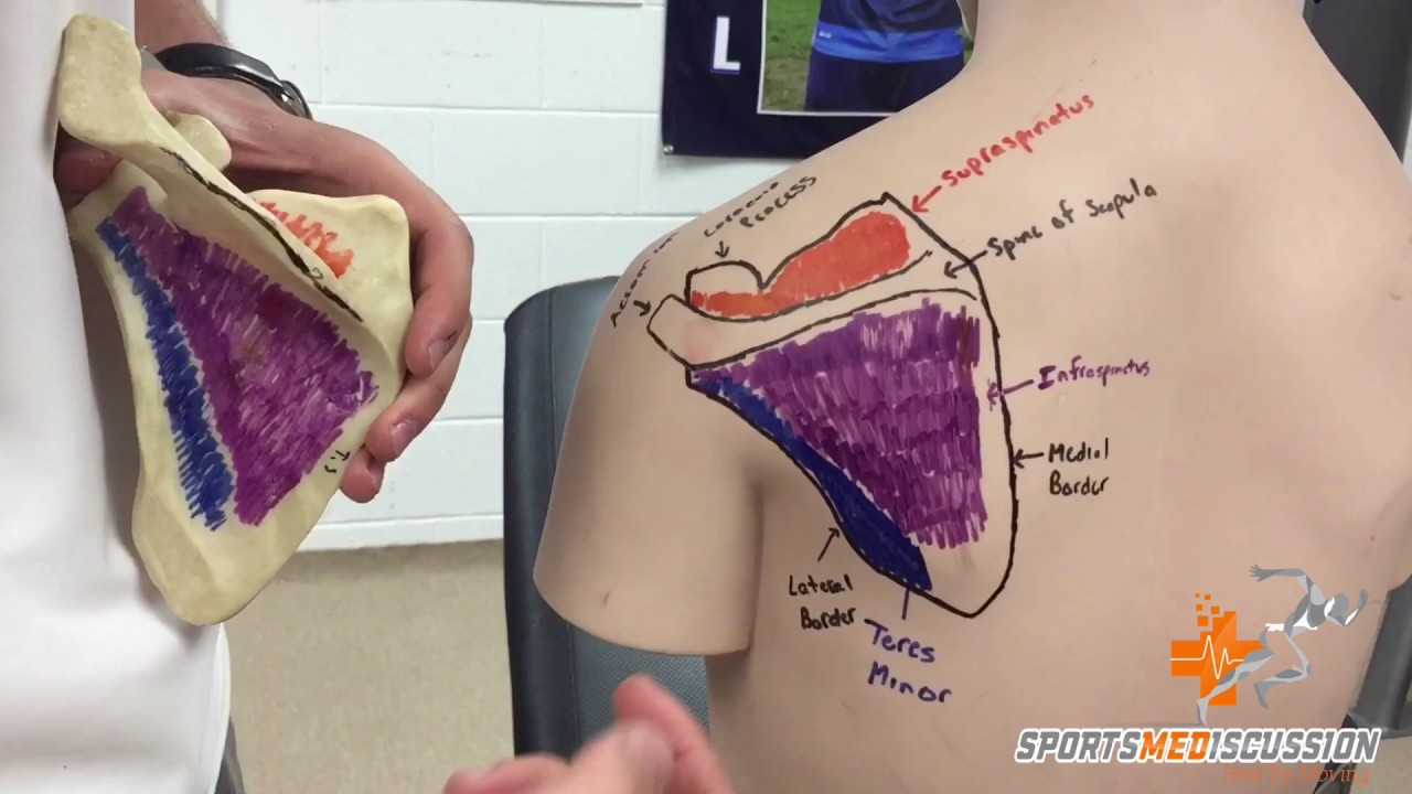 Rotator Cuff: Quick Surface Anatomy - YouTube