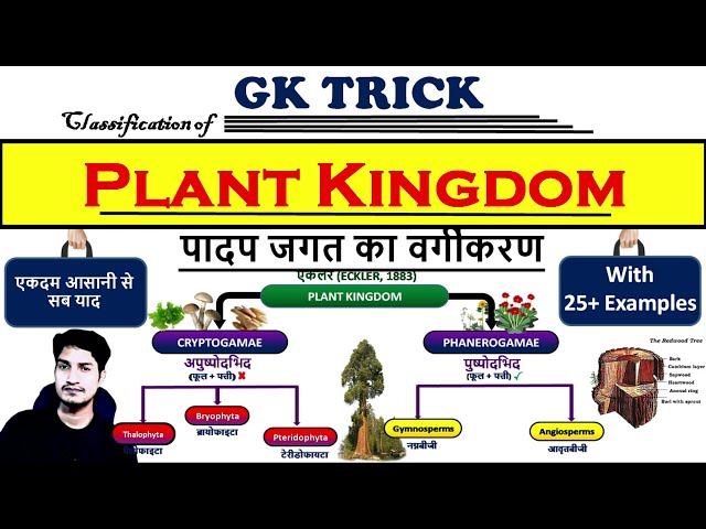 Part 1 : Classification of Plant Kingdom with charts |  What is the plant kingdom in hindi?