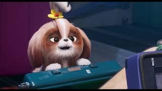 "The Secret Life Of Pets 2 - ""Shih Tzu"" 30 - In Cinemas May 24"