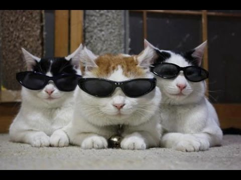 Cool For Cats Video Youtube
