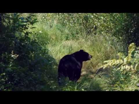 Bear Talk with Mike of the Bear With Us Sanctuary