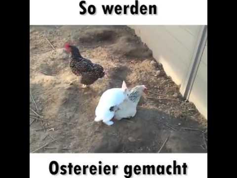 Wie Ficken VöGel