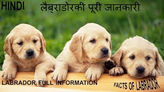Labrador Dogs Facts In Hindi | Dog Facts |Information | PeT InFo