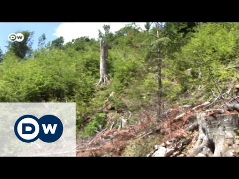Romania: Deforestation in the Carpathians | Focus on Europe