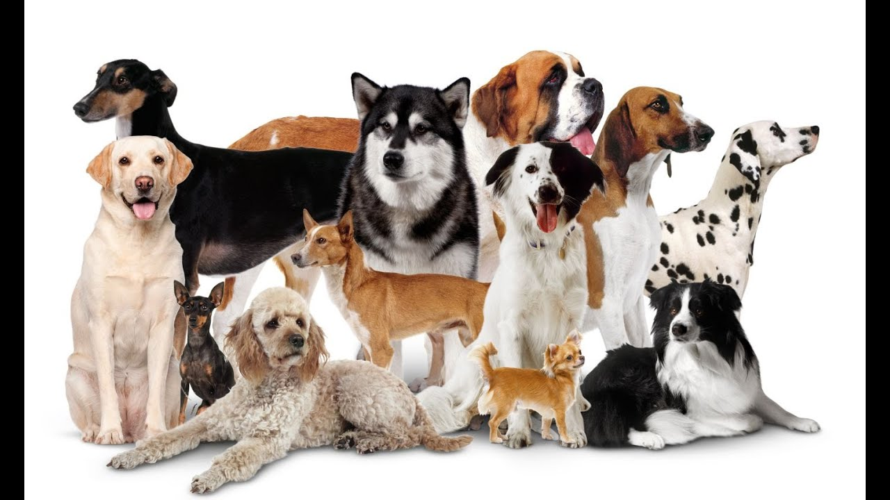 All Types Of Dogs Dogs 101 Youtube