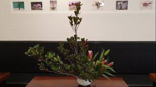 꽃으로 소리하다 #55 다정큼 나무, 르네브 백합   …