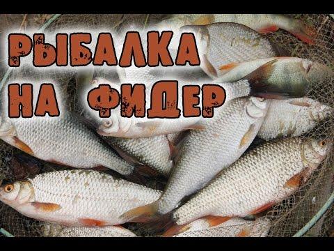 Рыбалка на фидер. Первая рыбалка на Урале.