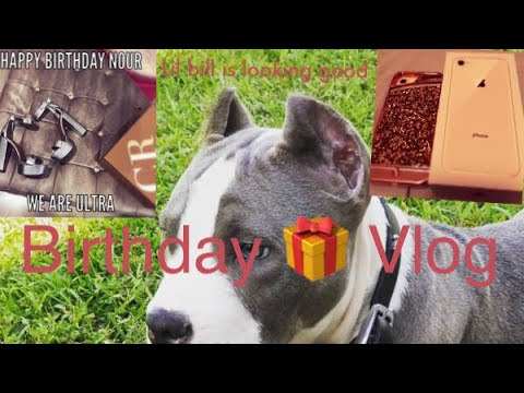 XL pit bulls for sale: Happy Birthday Nour:  Ultra Class Kennels