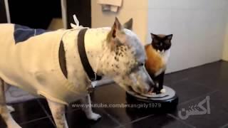 Video hài hước động vật. Khi động vật cũng biết troll nhau.