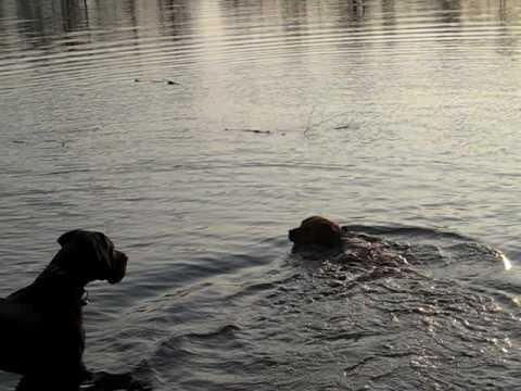Kisha, nochmals beim schwimmen
