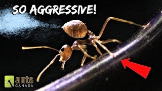 My New WEAVER ANTS Will Blow Your Mind