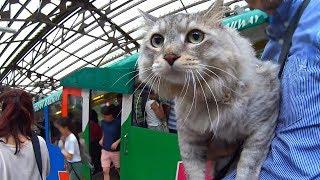 Cat HAL gonna take Mt. Mitakesan Cable car! 猫のハル、御岳山ケーブ...