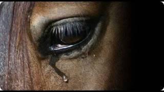 Cesar Adriano: Cavalo abandonado